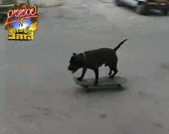 Skate Dog Picture Capture video